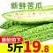 山东新鲜苦瓜5斤农家自种蔬菜当季凉瓜批发顺丰包邮