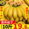 【Go云易商城】广西香蕉新鲜小米蕉水果包邮香焦小香蕉带箱10斤自然熟当季整箱