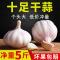 【Go云易商城】2019年新鲜干大蒜头干蒜5斤新蒜10低价红紫皮大蒜香种子种籽包邮