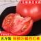 【Go云易商城】500g西红柿不催熟自然熟大番茄新鲜蔬菜